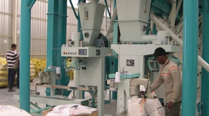 Maize and Wheat Mill Processing Plant